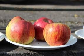 2015-10-17 - Pressage pommes Becco (26) (Copier)