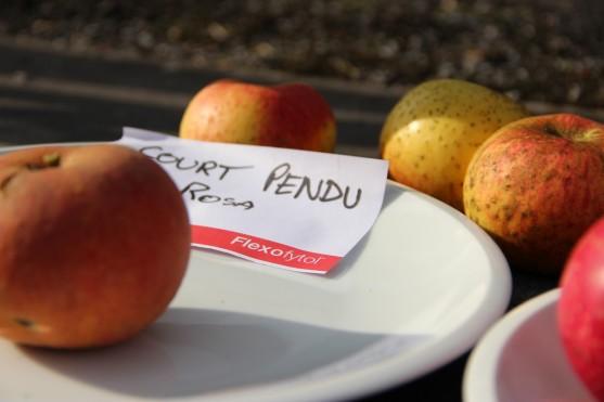 2015-10-17 - Pressage pommes Becco (27) (Copier)