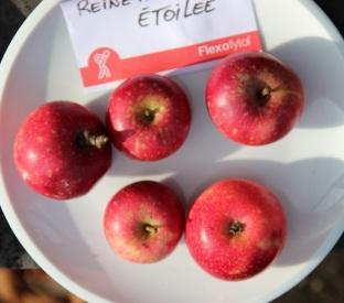 2015-10-17 - Pressage pommes Becco (29) (Copier)