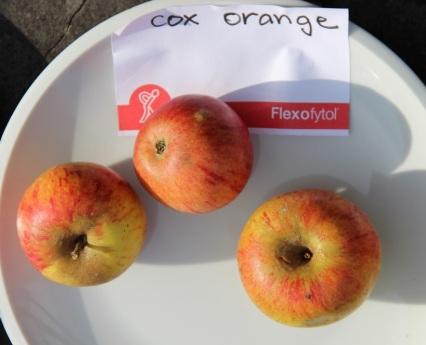 2015-10-17 - Pressage pommes Becco (30) (Copier)