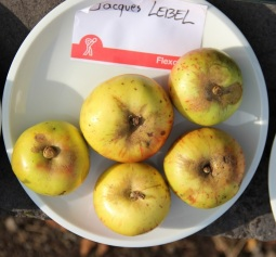 2015-10-17 - Pressage pommes Becco (31) (Copier)