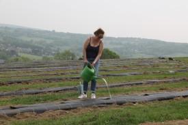 2020-05-08 - Plantation vigne Baudrifosse (11)