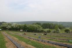 2020-05-08 - Plantation vigne Baudrifosse (14)