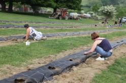 2020-05-08 - Plantation vigne Baudrifosse (16)