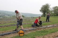 2020-05-08 - Plantation vigne Baudrifosse (19)