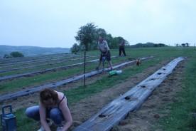 2020-05-08 - Plantation vigne Baudrifosse (27)