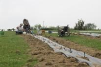 2020-05-08 - Plantation vigne Baudrifosse (41)
