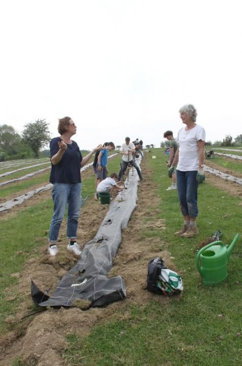 2020-05-08 - Plantation vigne Baudrifosse (44)