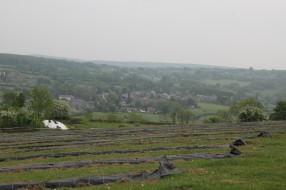 2020-05-08 - Plantation vigne Baudrifosse (49)