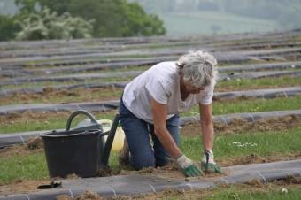2020-05-08 - Plantation vigne Baudrifosse (8)