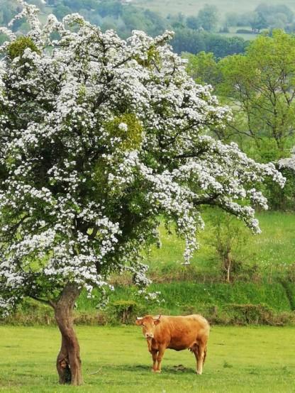 2020-05-08et09 - Plantation vignes Baudrifosse - © Isabelle Malo (23)