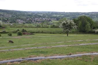 2020-05-09 - Plantation vigne Baudrifosse (11)