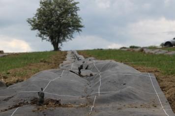 2020-05-09 - Plantation vigne Baudrifosse (2)