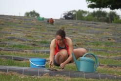2020-05-09 - Plantation vigne Baudrifosse (20)