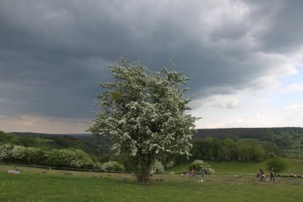 2020-05-09 - Plantation vigne Baudrifosse (25)