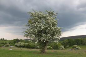 2020-05-09 - Plantation vigne Baudrifosse (27)