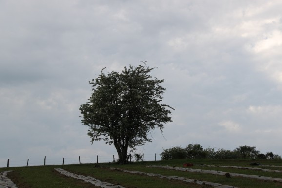 2020-05-09 - Plantation vigne Baudrifosse (31)