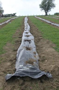 2020-05-09 - Plantation vigne Baudrifosse (32)